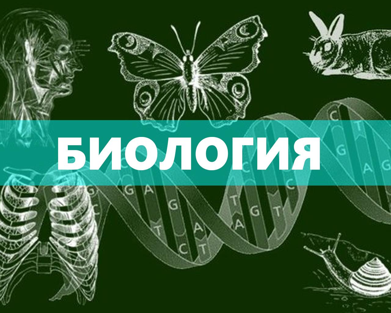 Биология (Васейкина Н.В.)